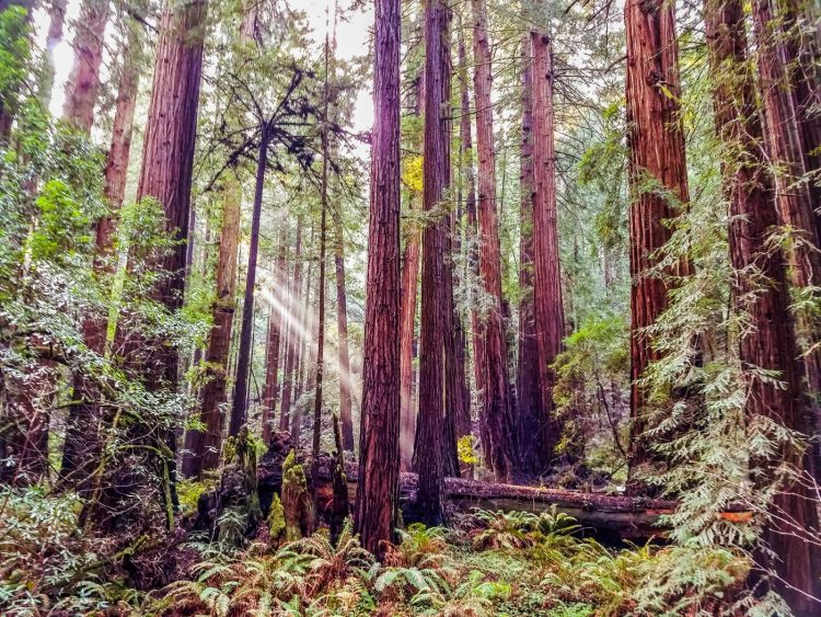 A Day Trip From San Francisco- Hiking Muir Woods