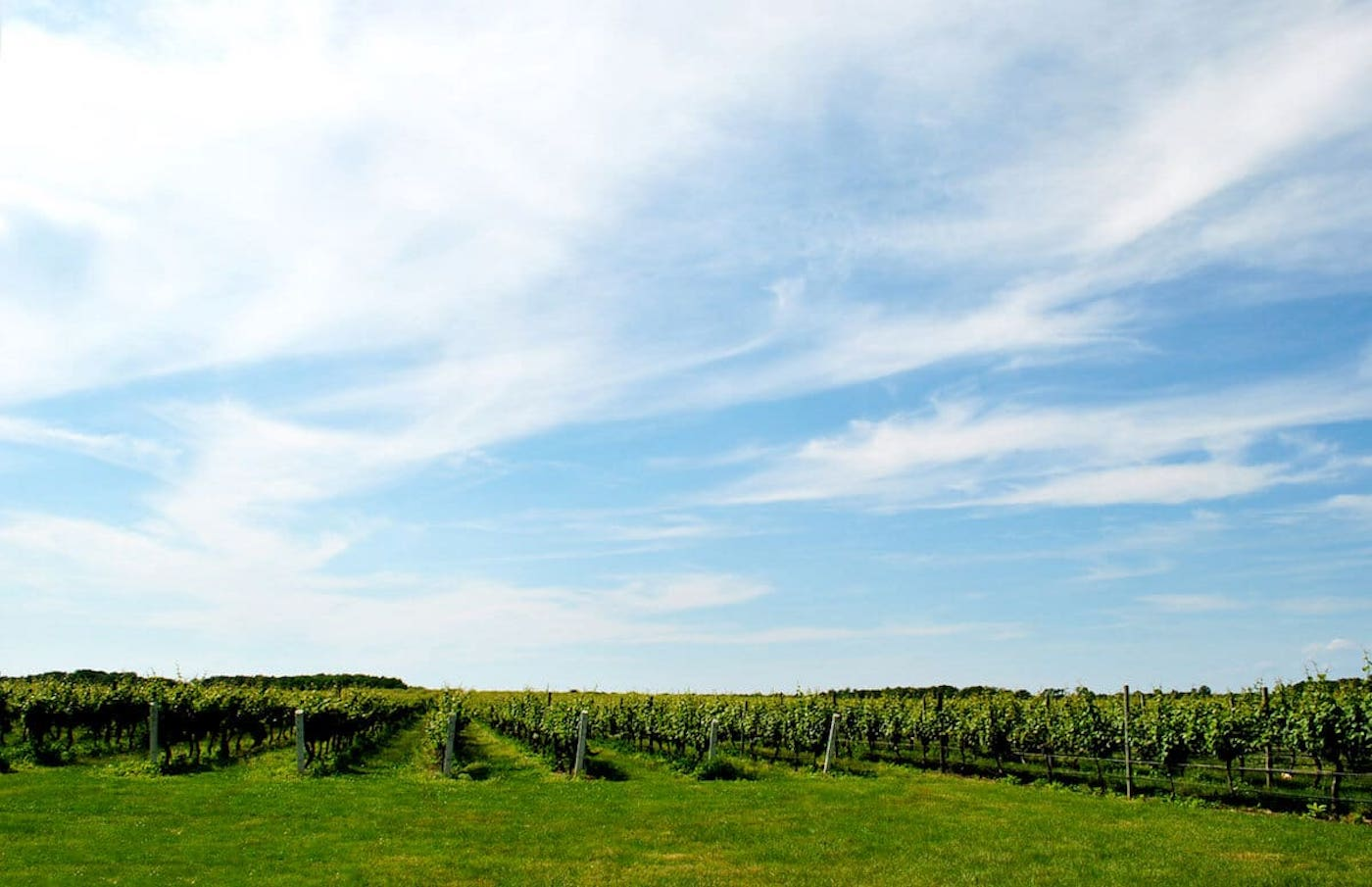 Day Trips from NYC- North Fork Wineries