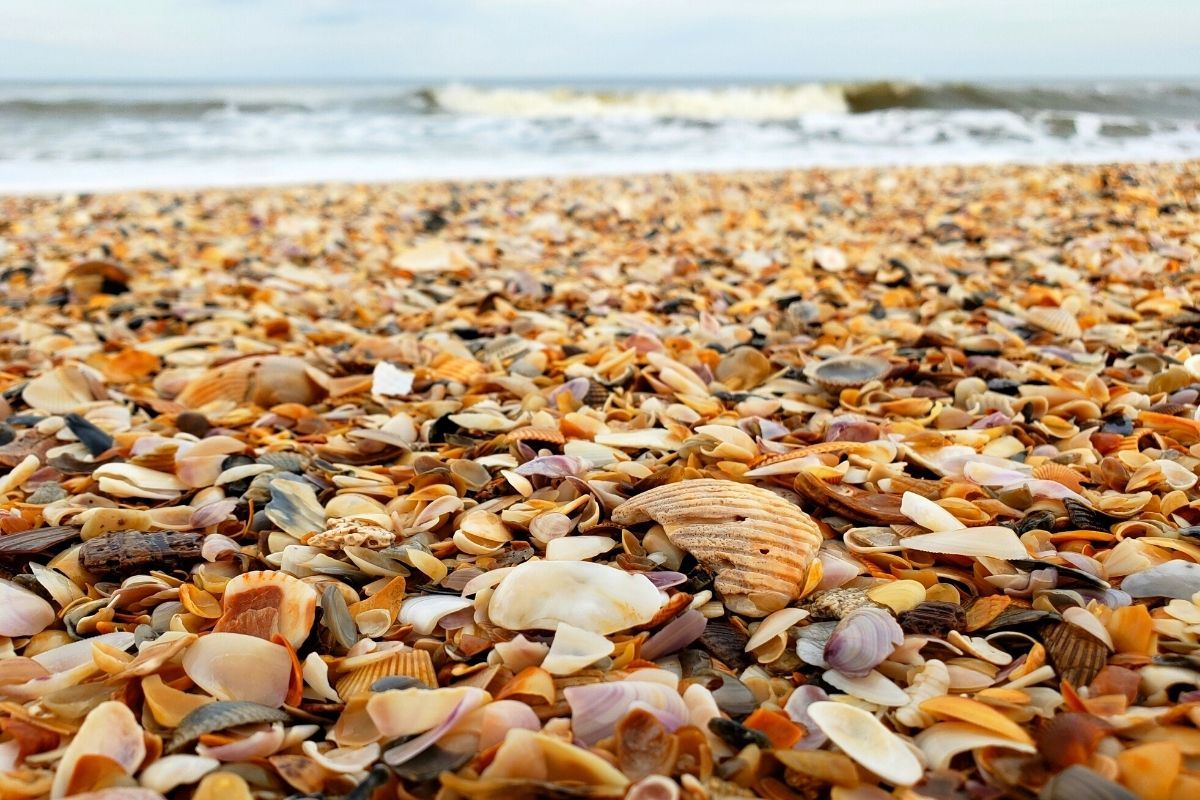 Shelling Beaches
