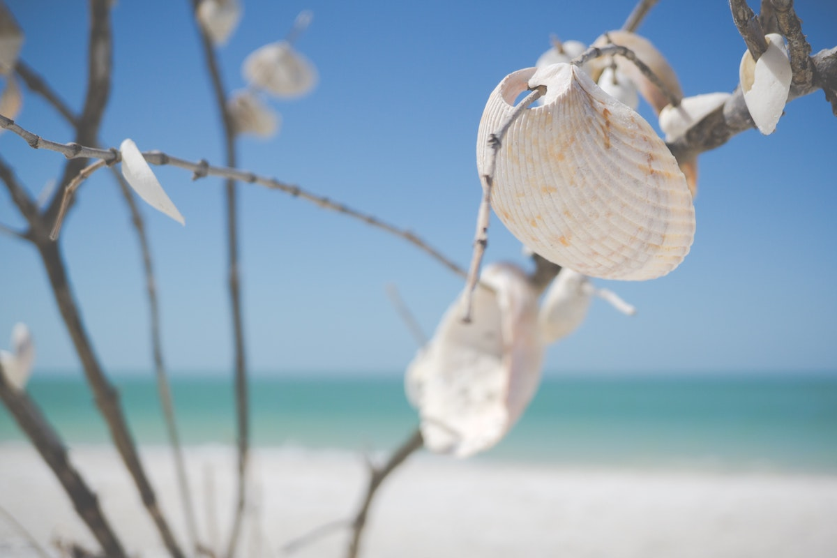 Shelling Beaches. Marco Island