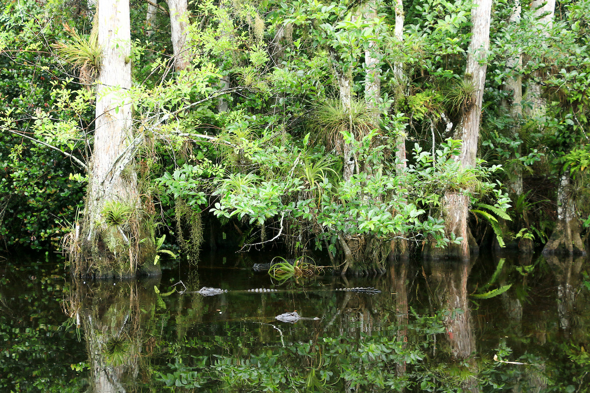 Ten Thousand Islands - Florida, USA-vacation spots on east coast