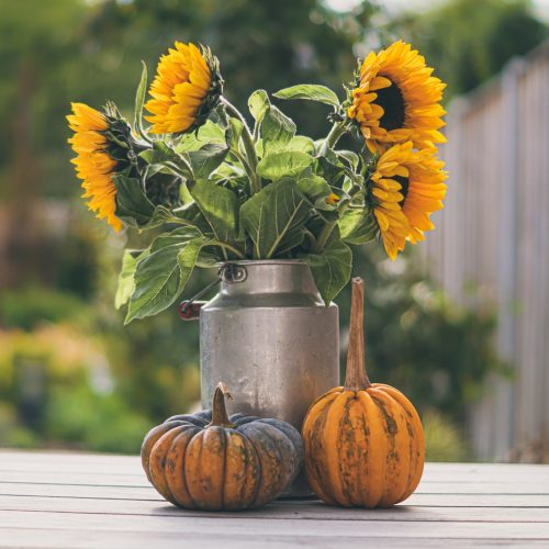 Fall is here! Make it amazing with these cheap fall apartment decor ideas