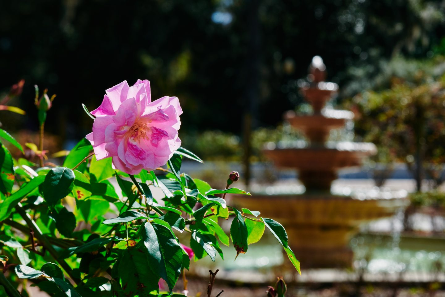 Things to do in Orlando for Adults- Flower at Harry P. Leu Gardens